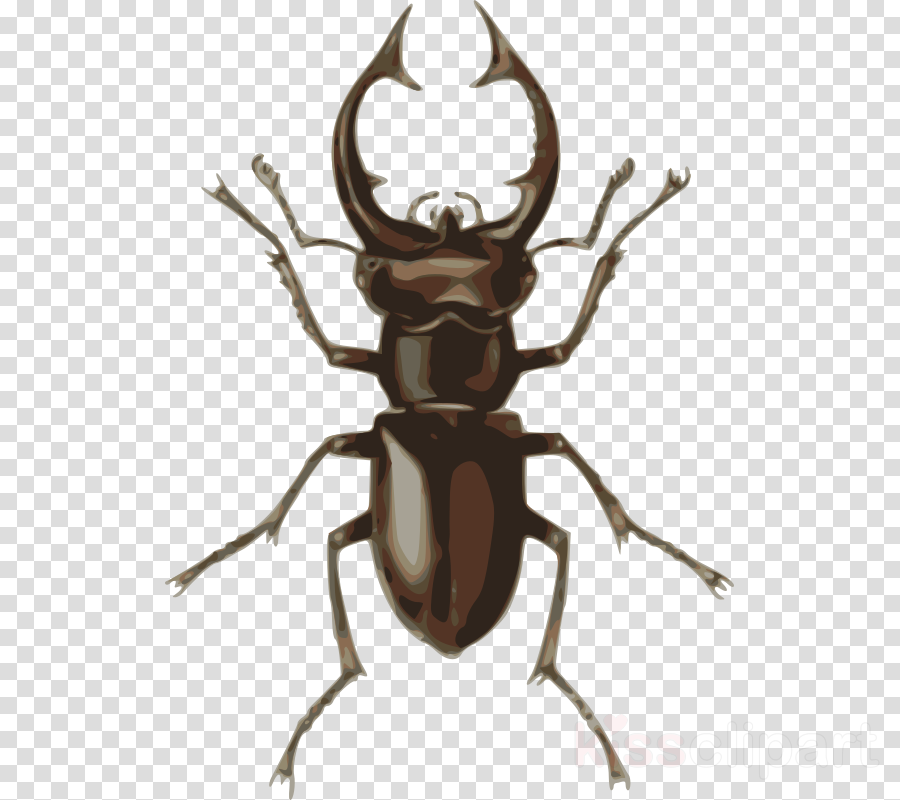 stag beetle png clipart Stag beetle Clip art
