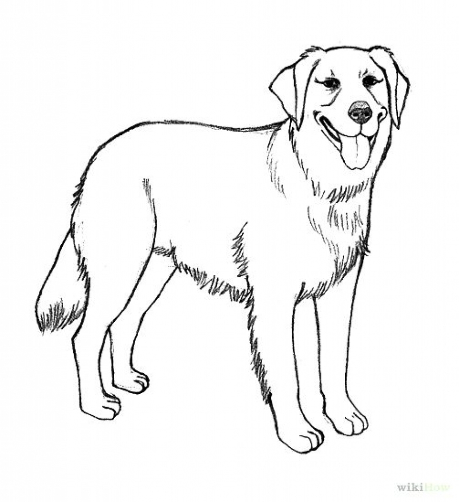 Download golden retriever coloring pages clipart Labrador Retriever ...