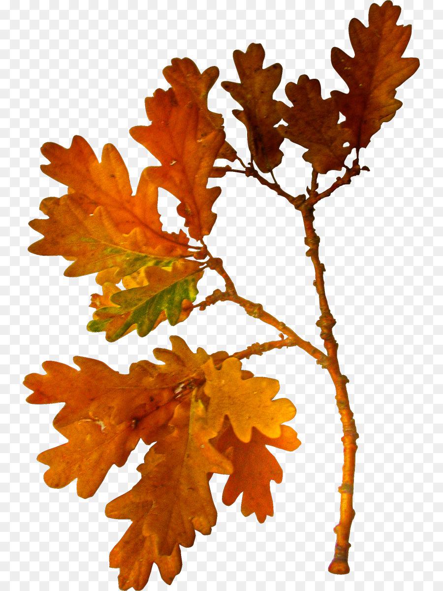 Autumn Tree Branch