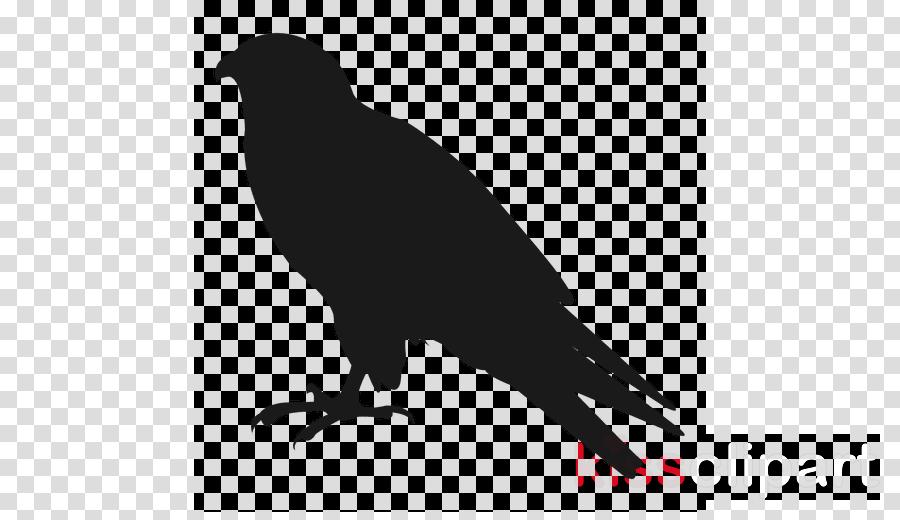 Common raven clipart American crow Bird Common raven