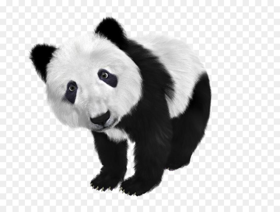 giant panda transparent clipart Giant panda Koala Red panda