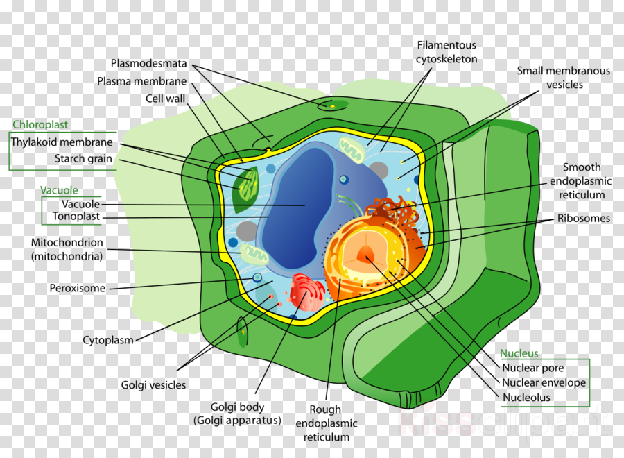 Cell Wall Clipart 2 000 000 Cool Cliparts Stock Vector And