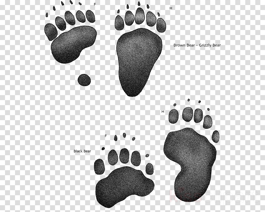 Casting clipart American black bear Clip art