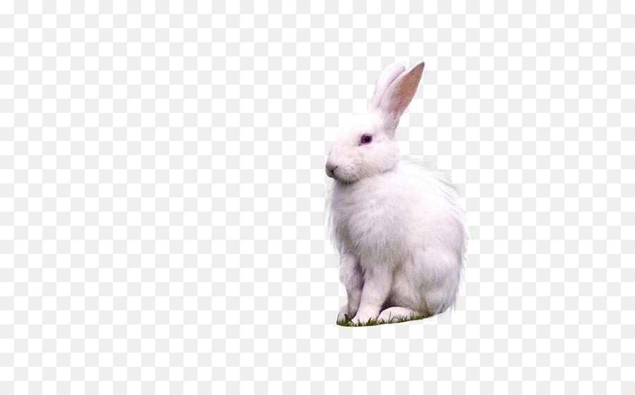 Rabbit Cartoon