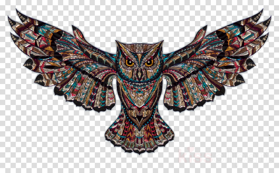 Owl Bird Wing Transparent Png Image Clipart Free Download