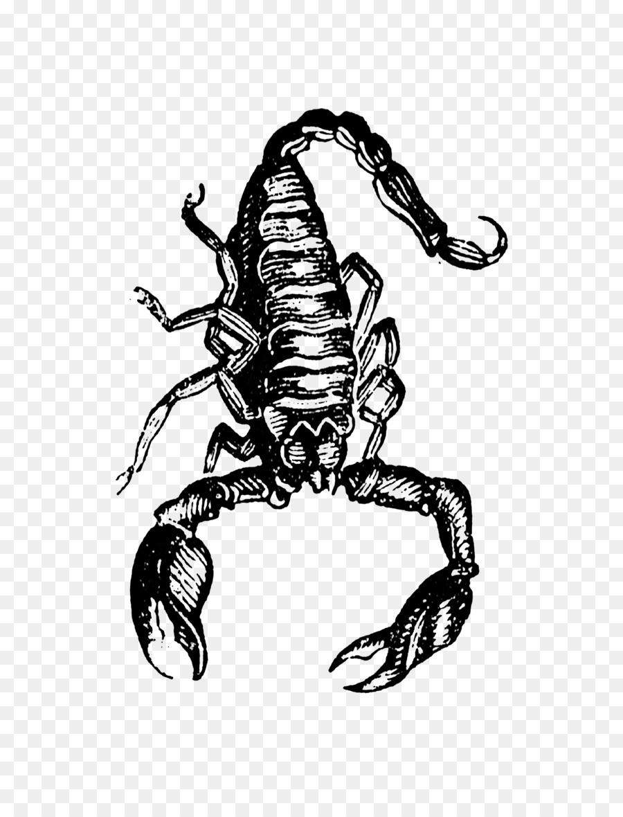 Скорпионы картинки для детей, смешные торты картинки