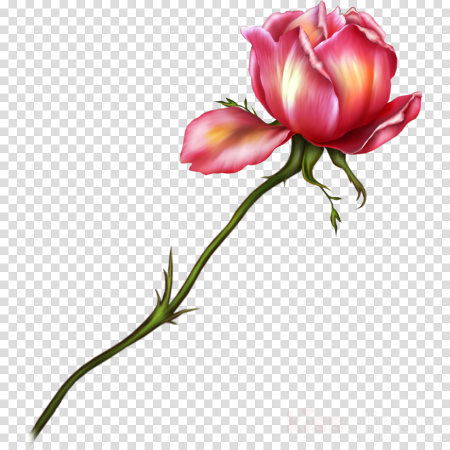 Rose clipart Floral design Pink Rose