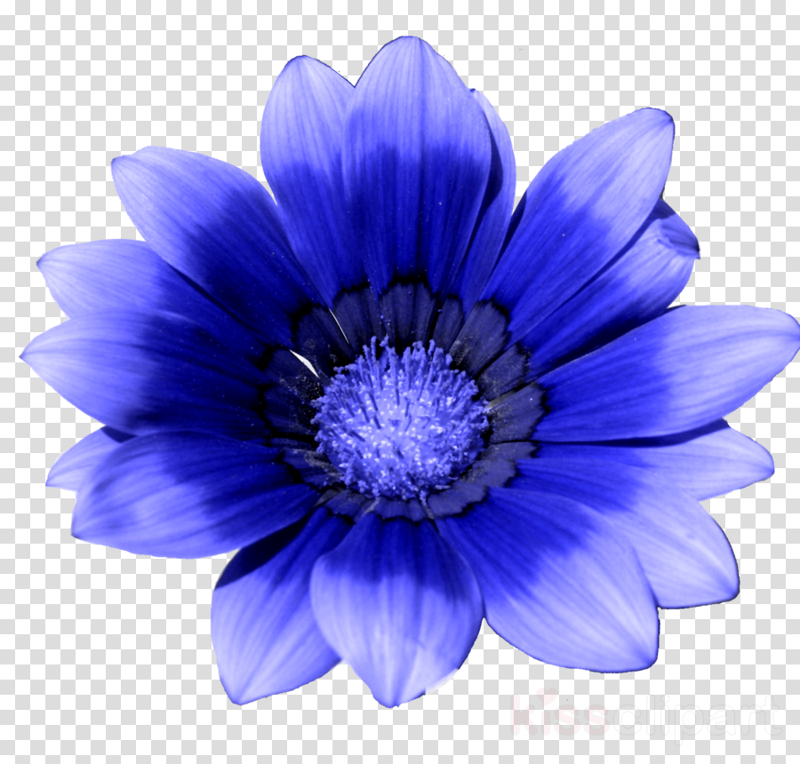 Blue clipart Blue flower Stock photography