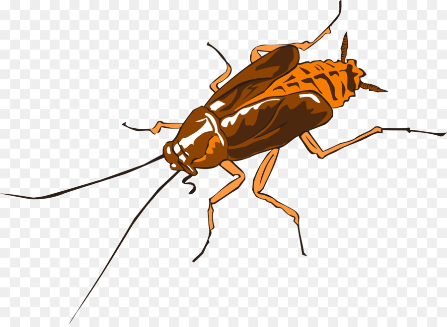 cockroach vector png clipart German cockroach Clip art