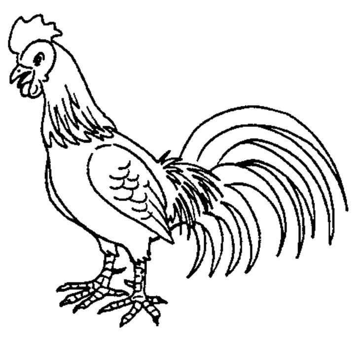 Clipart Resolution 720 720 Gambar Mewarnai Ayam Jantan Clipart