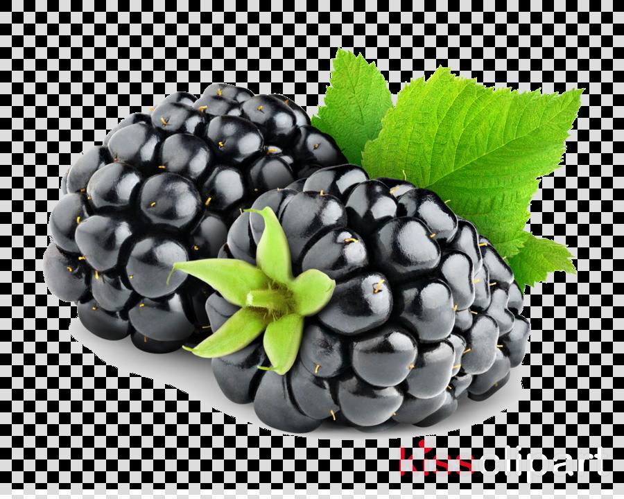 blackberry fruit clipart BlackBerry Fruit