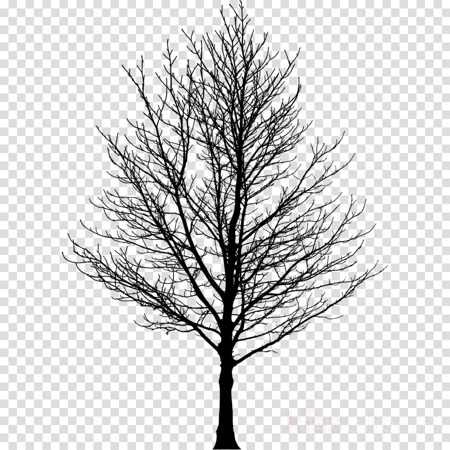 sugar maple drawing clipart The Sugar Maple Drawing