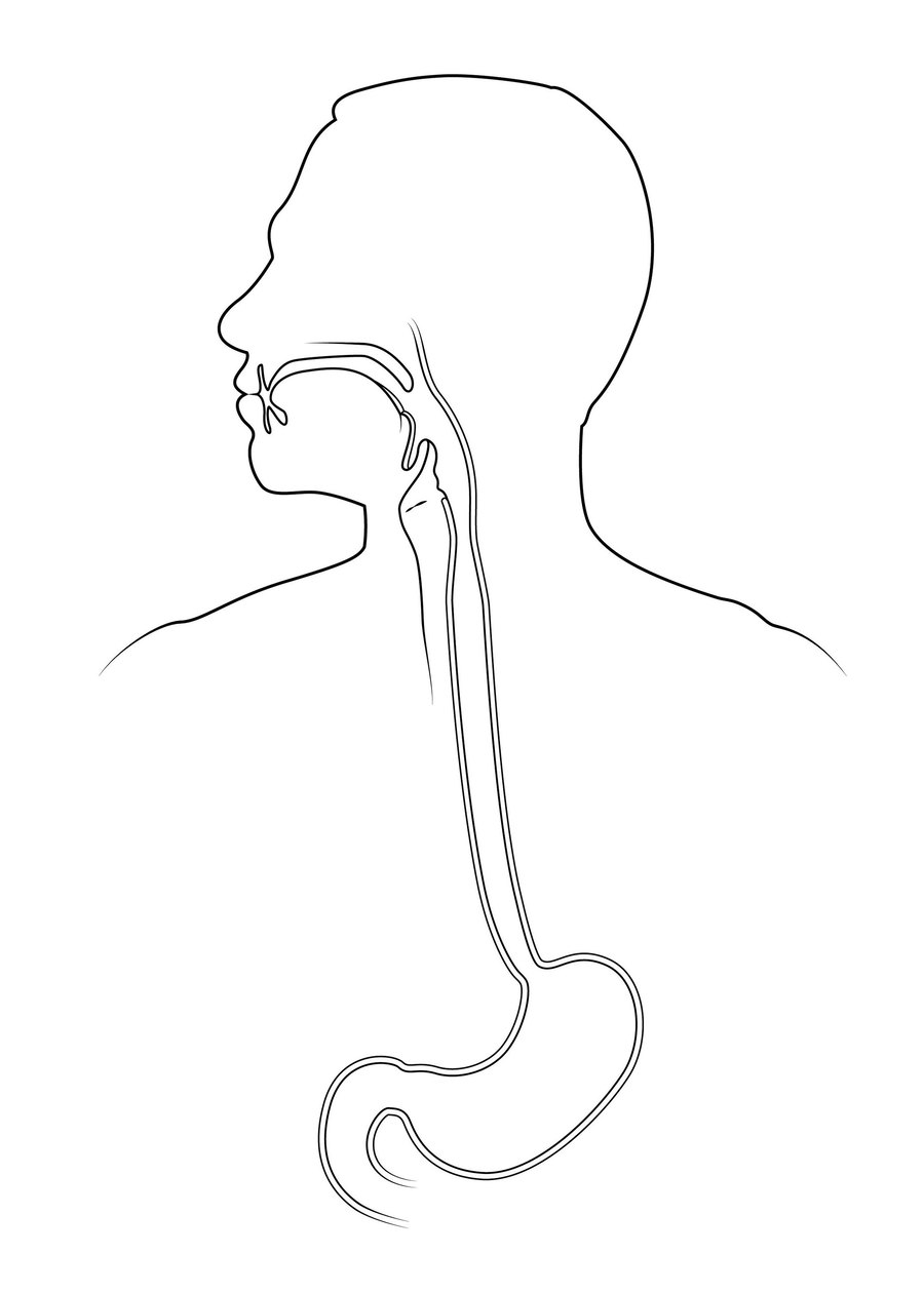 Download Gastrointestinal Tract Clipart Gastrointestinal Tract