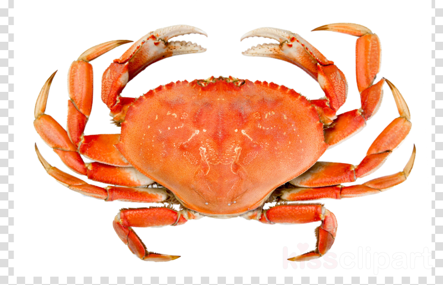 crab stock clipart Crab Stock photography Royalty-free