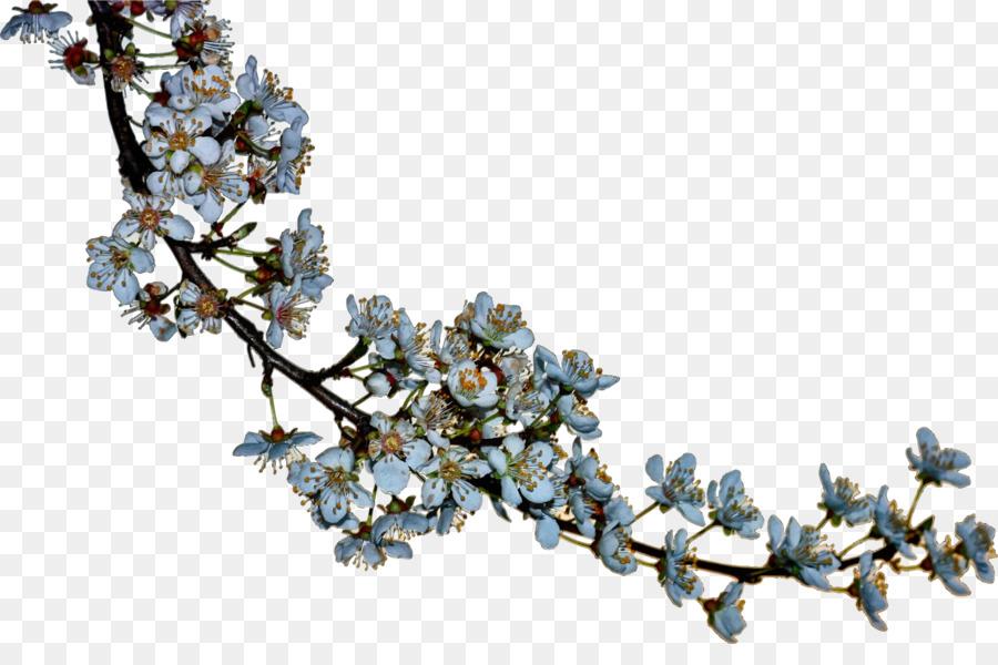blossoms png clipart Blossom Clip art
