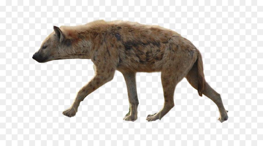 Silhouette clipart Hyena