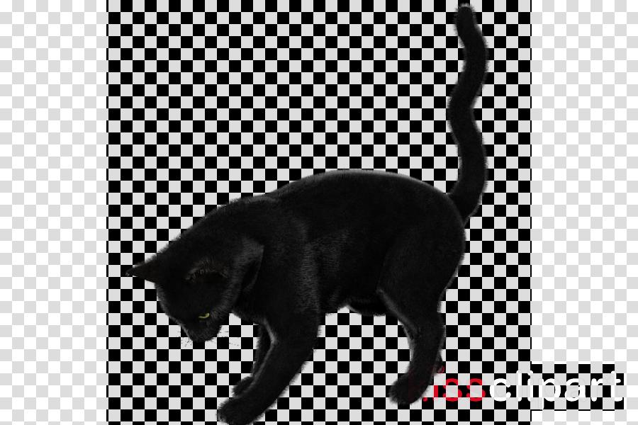 Cat clipart Black cat Bombay cat Korat