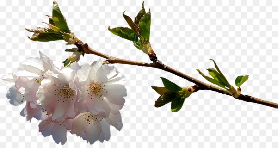 flor png clipart