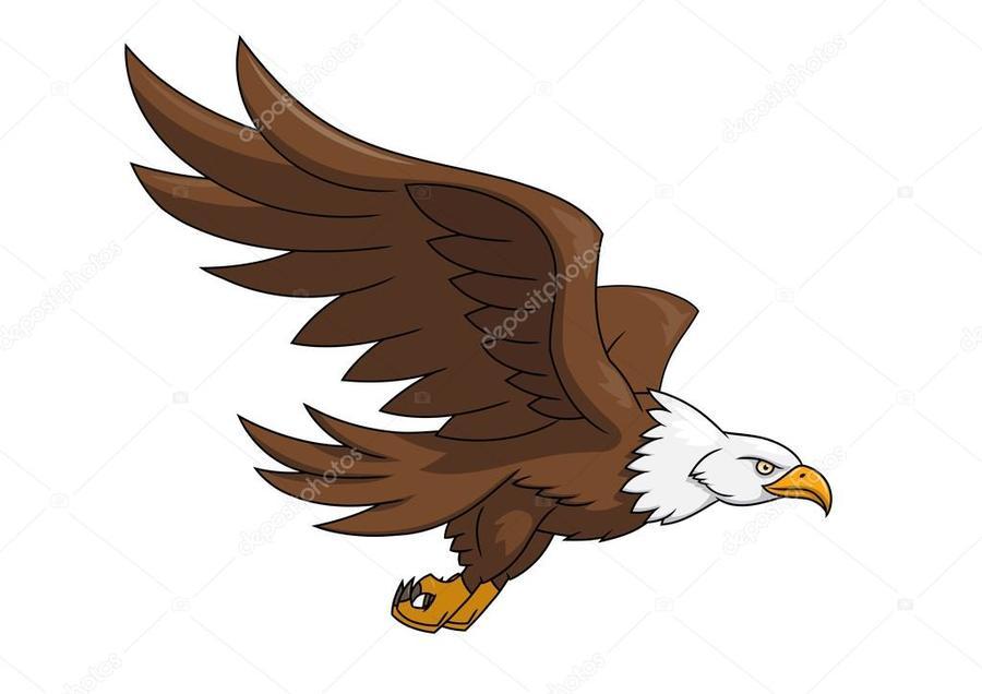 download flying eagle images background white flying clipart bald