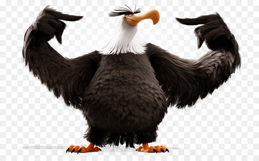 Eagle angry. Stella birds clipart bird