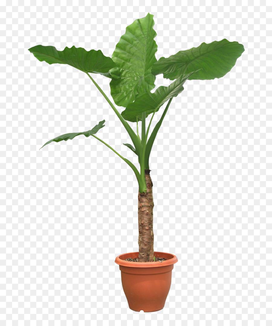 planten png clipart Houseplant Plants