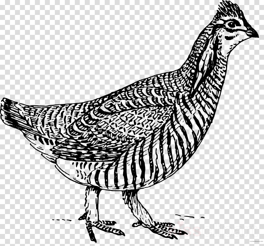 o rly books testing clipart Chicken as food Clip art