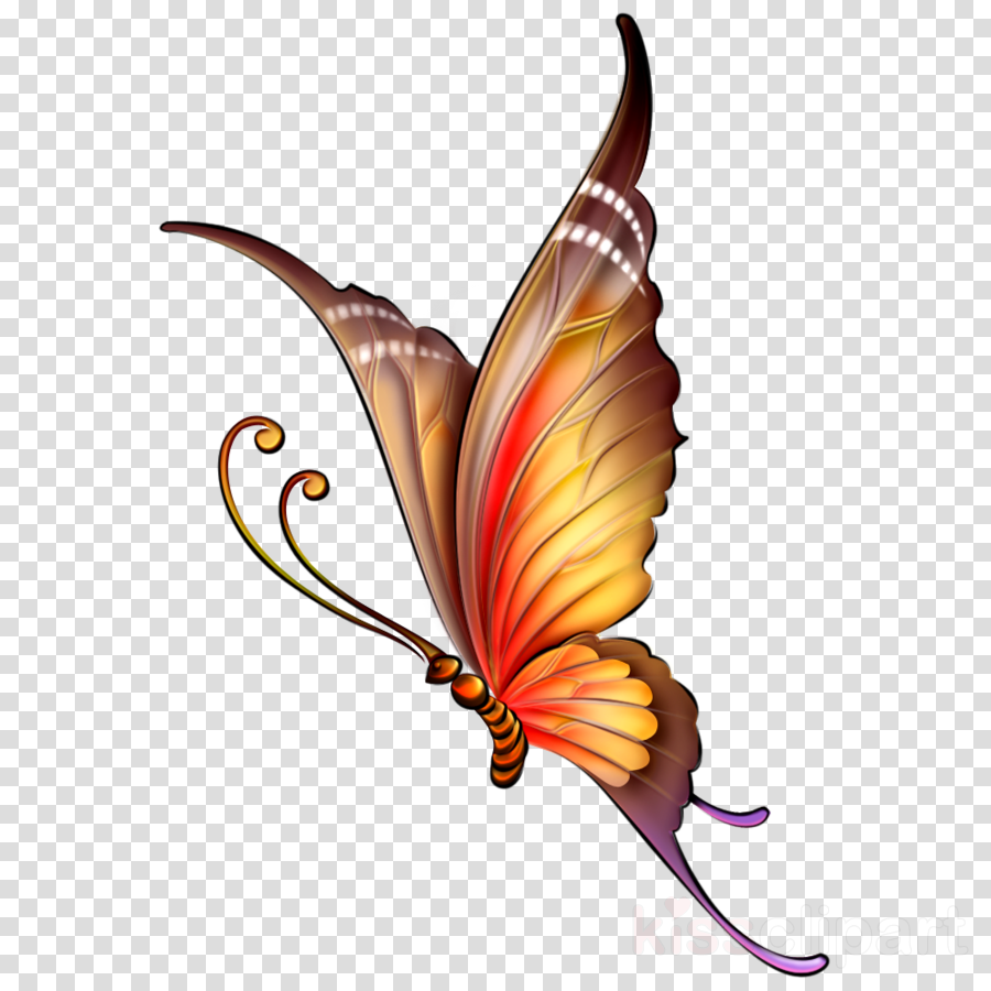 butterfly drawing color clipart Butterfly Drawing Insect