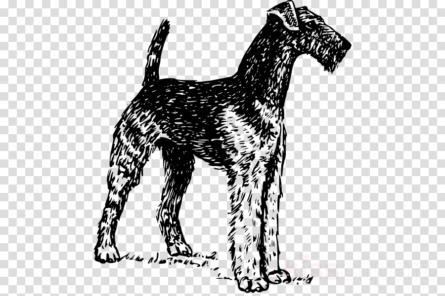 airedale drawing clipart Airedale Terrier Bedlington Terrier Boston Terrier