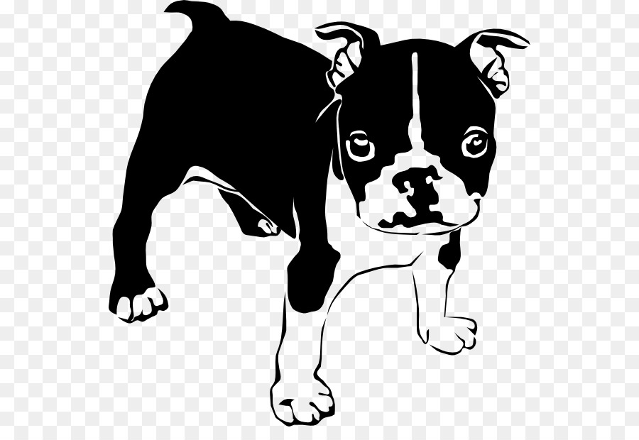 Bulldog clipart French Bulldog Boston Terrier