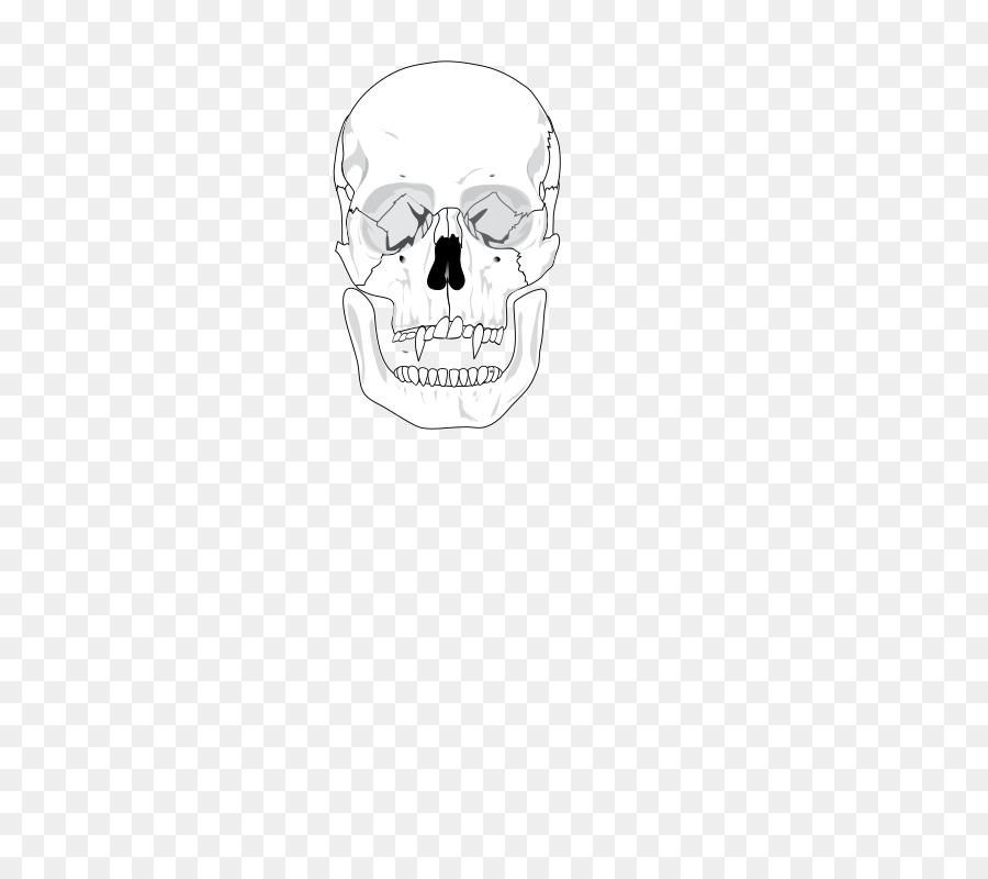 Download Human Skull Diagram Clipart Skull Ians Gang An Instinct