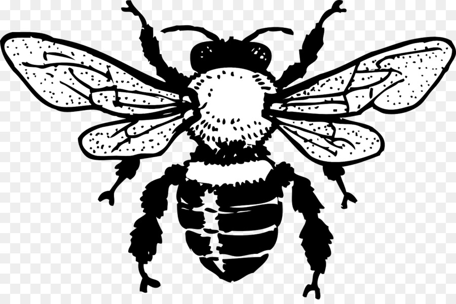 bee black and white clipart European dark bee Insect