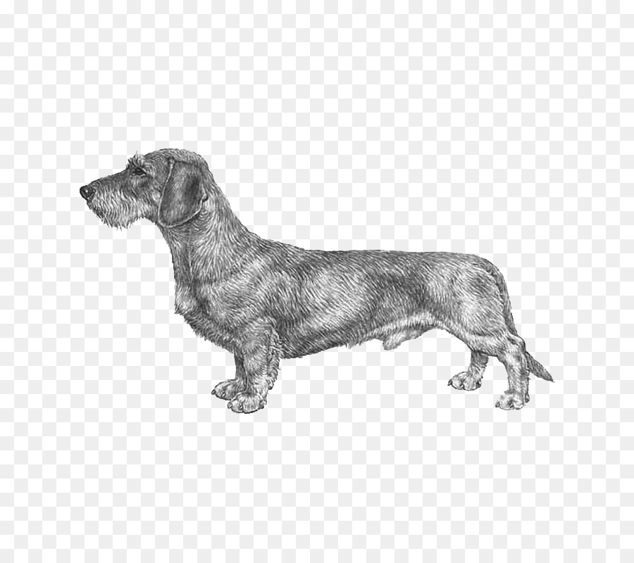 Tax clipart Dachshund Dog breed Coat