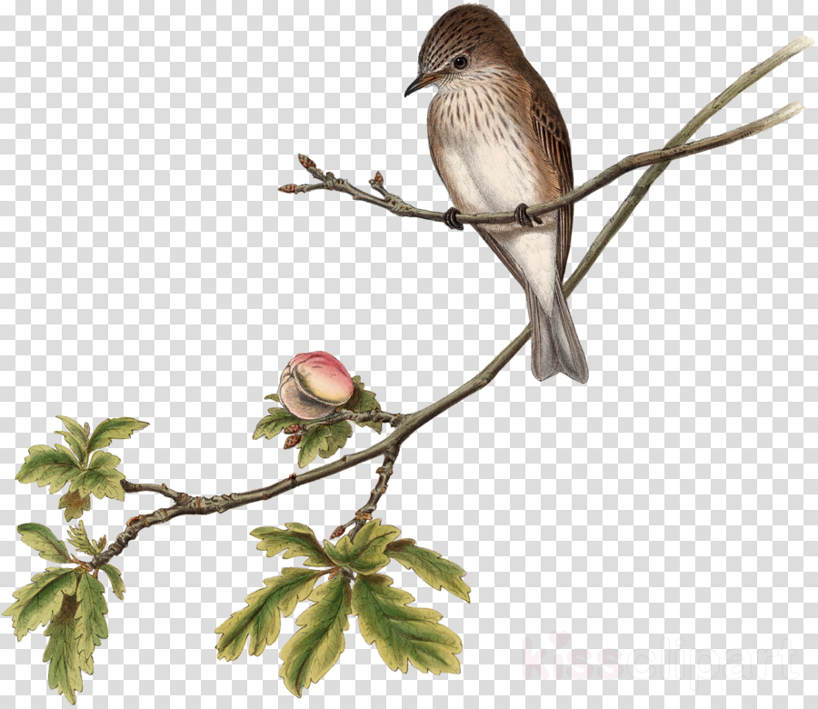 Bird Feather Tree Transparent Png Image Clipart Free Download