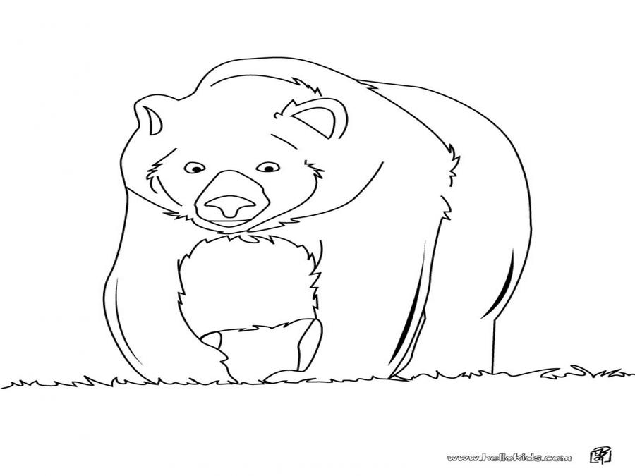 Download animales de la selva para colorear oso clipart Polar bear ...