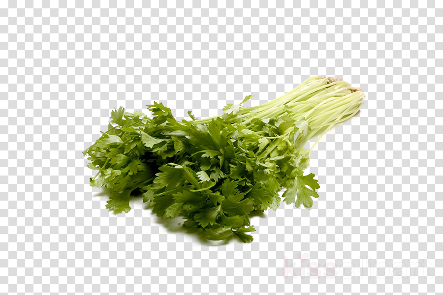 Portable Network Graphics clipart Coriander Parsley Celery