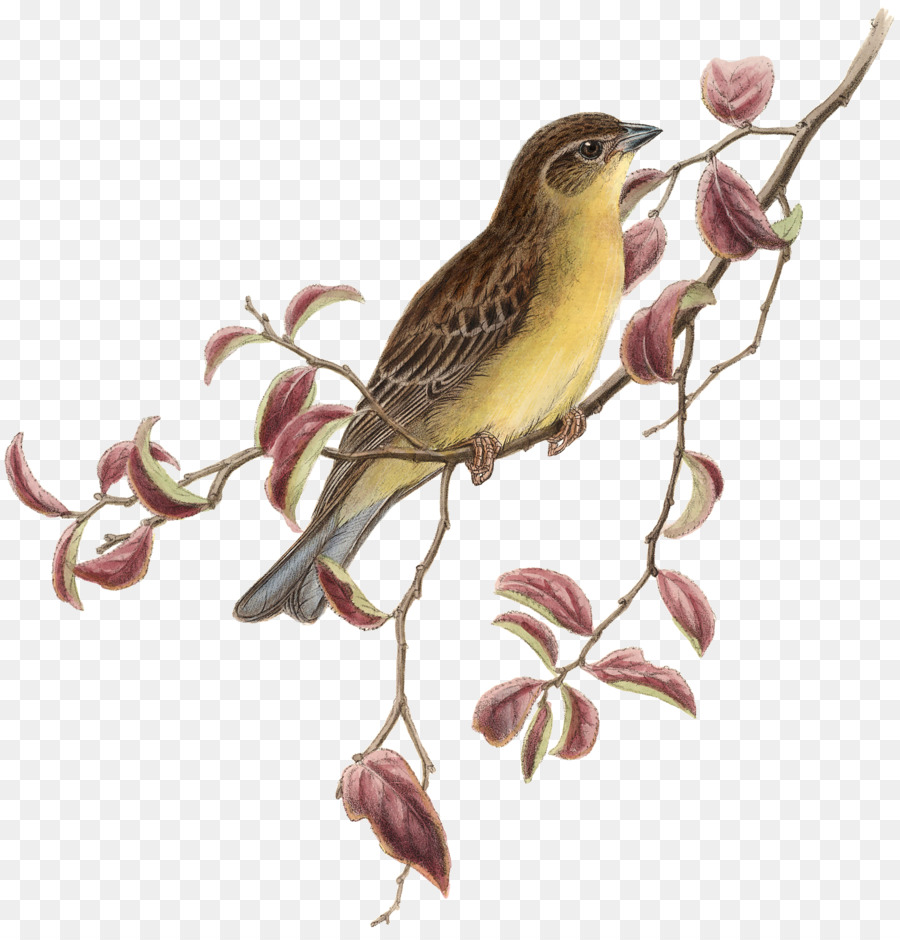 Download darby home co bird on a branch wood framed printed stone ...