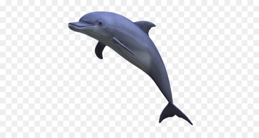 Dolphin Cartoon