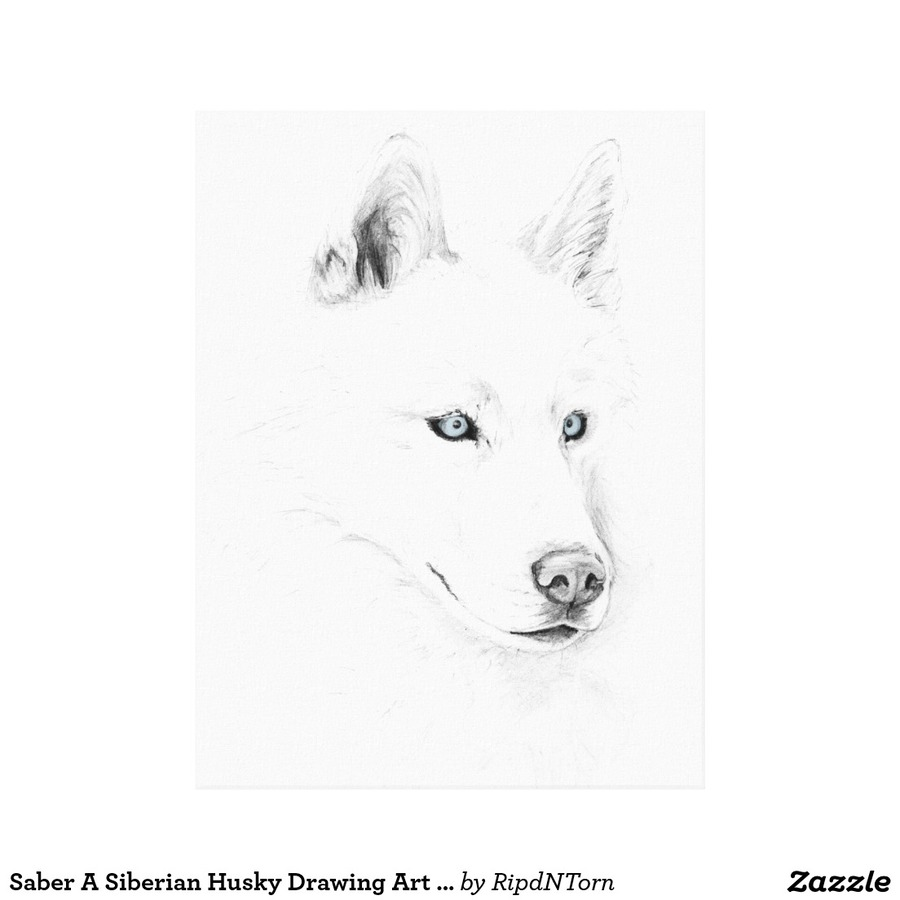 download white siberian husky drawing clipart siberian husky puppy