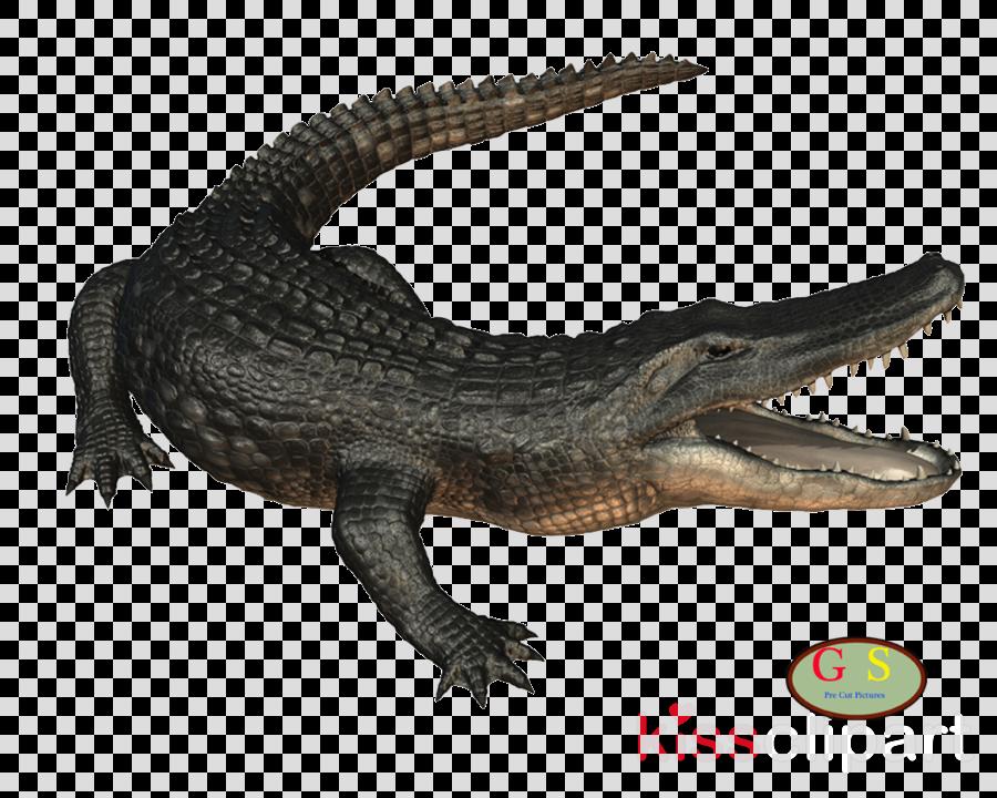 Crocodiles clipart American alligator Nile crocodile