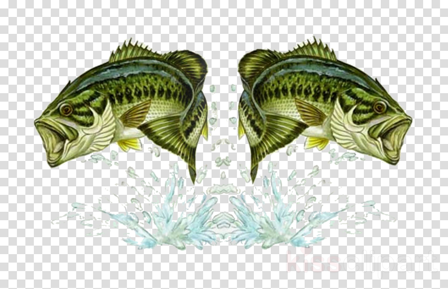 Fishing clipart Bass fishing