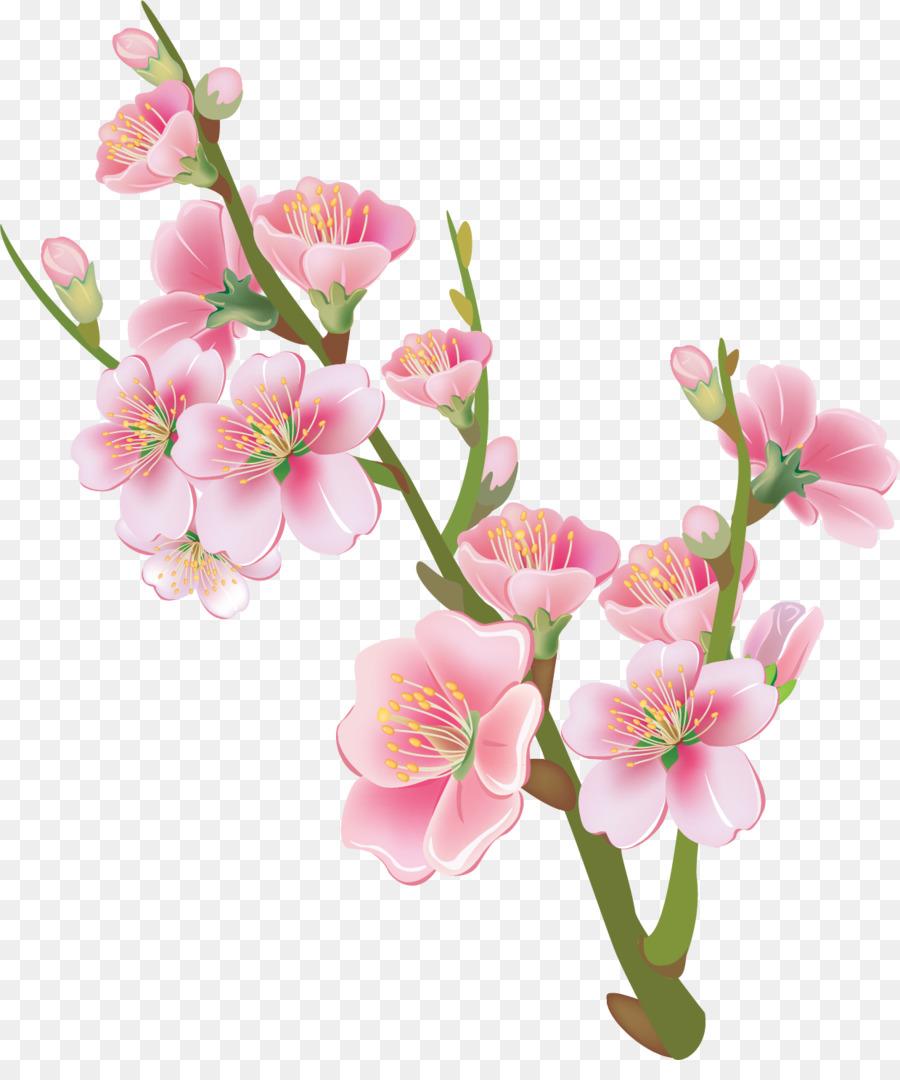 cherry blossom flower drawing clipart Cherry blossom