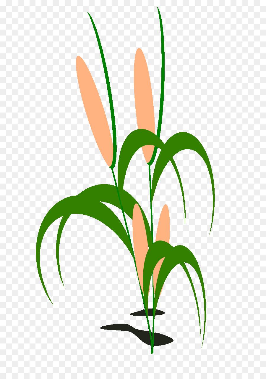 Clip art clipart Grasses Clip art