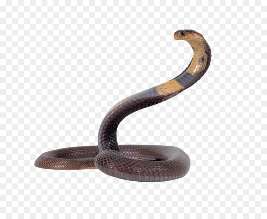 Snake Cartoon