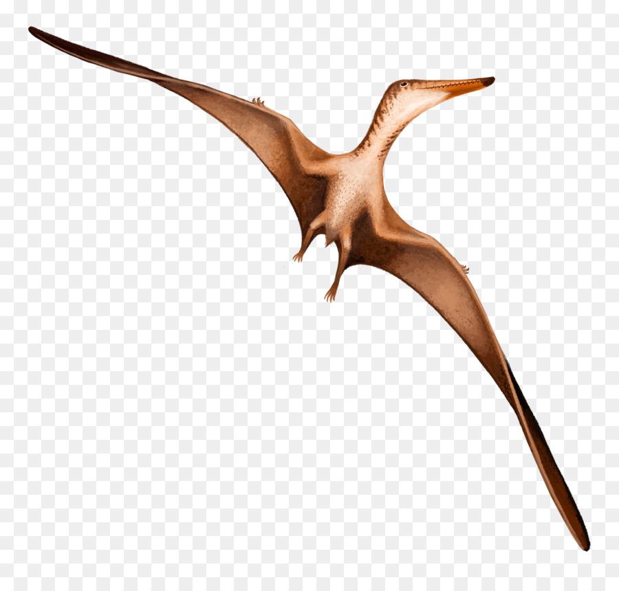 Bird Wing