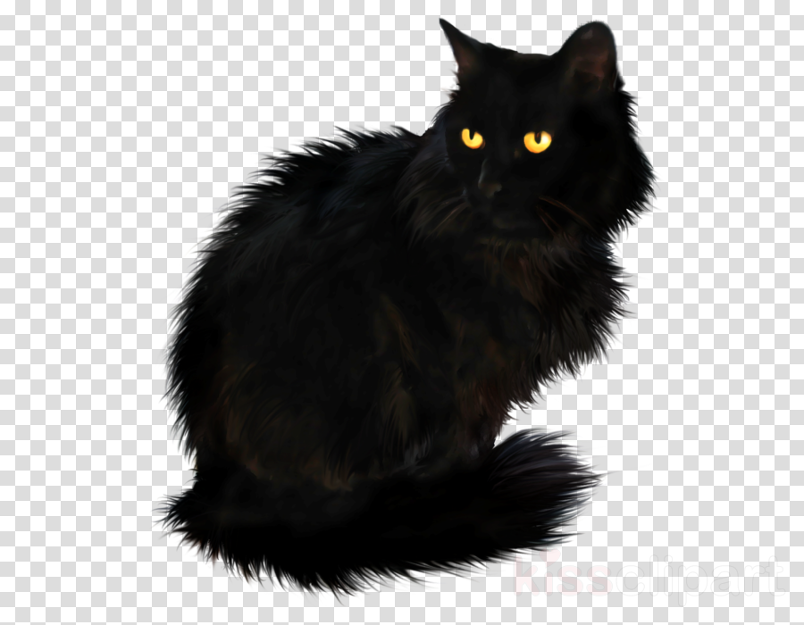 black persian cat clipart Persian cat British Longhair Maine Coon