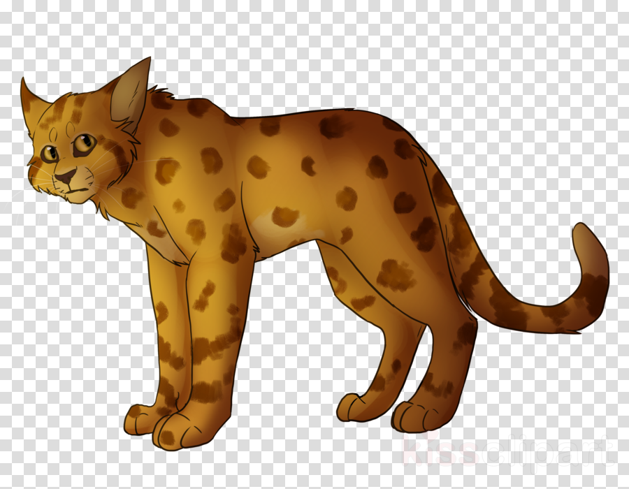 cheetah clipart Whiskers Tiger Cat