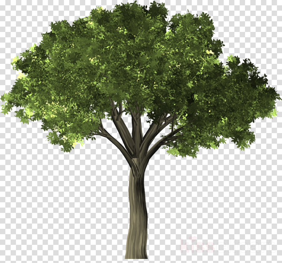 Tree clipart Banyan Tree Elm