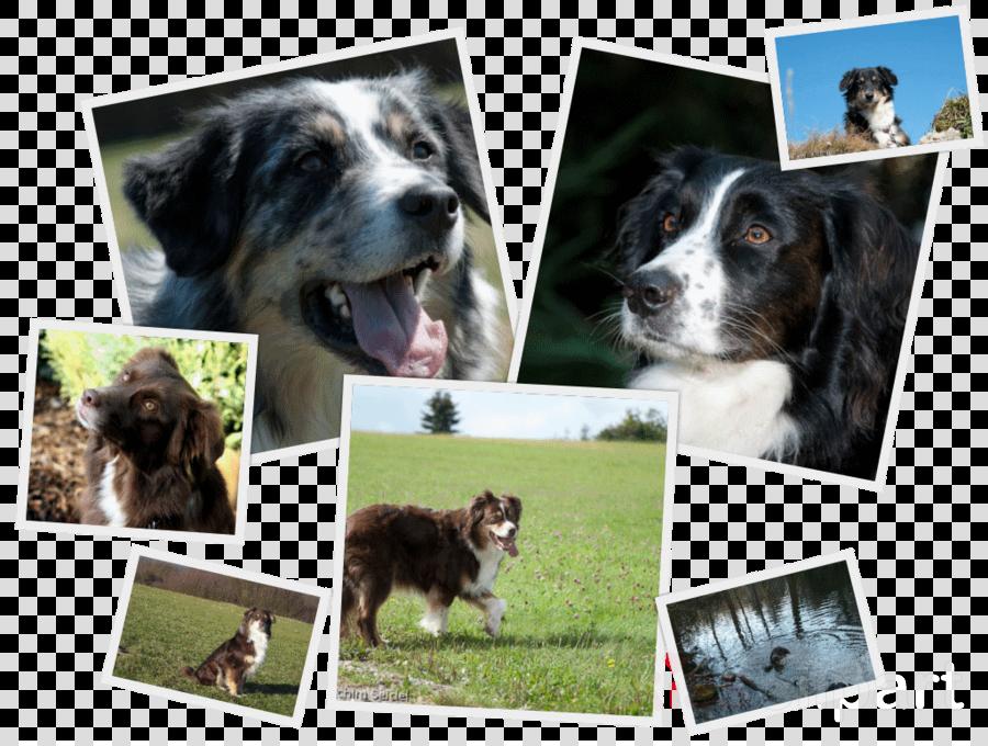 Collage clipart Dog breed Border Collie German Shepherd