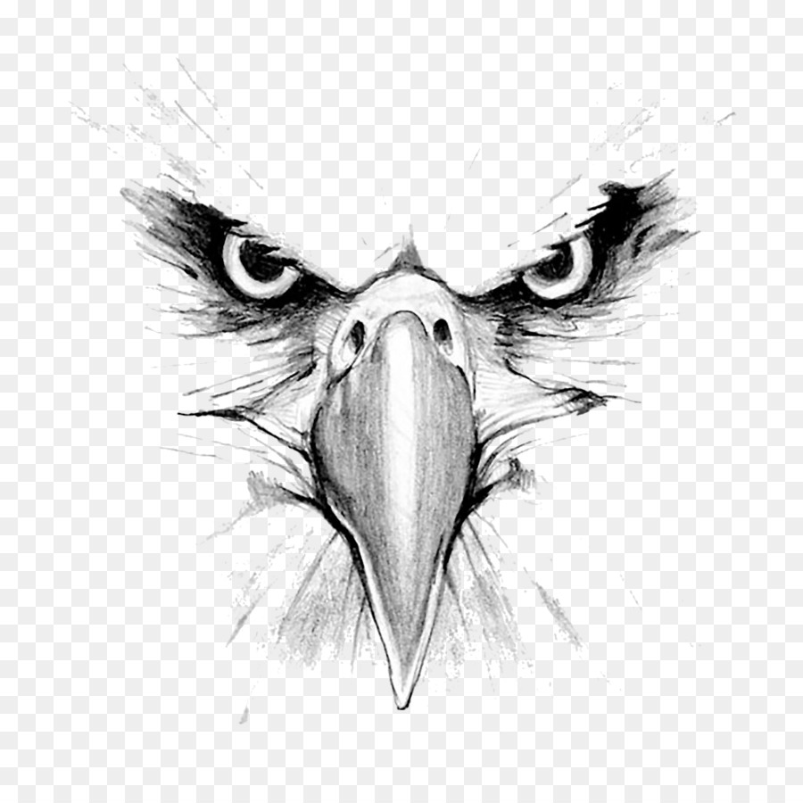 Eagle face drawing clipart bald eagle drawing