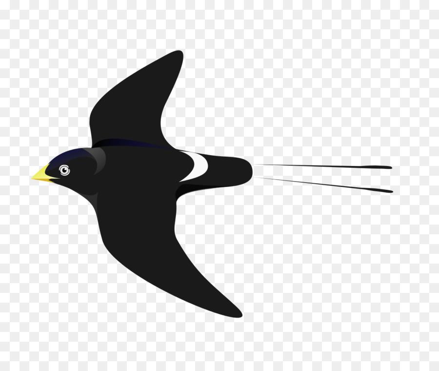 Swallow Bird